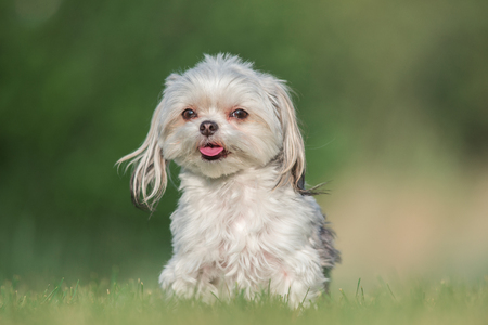 Small dog, mutt, portrait with soft green background