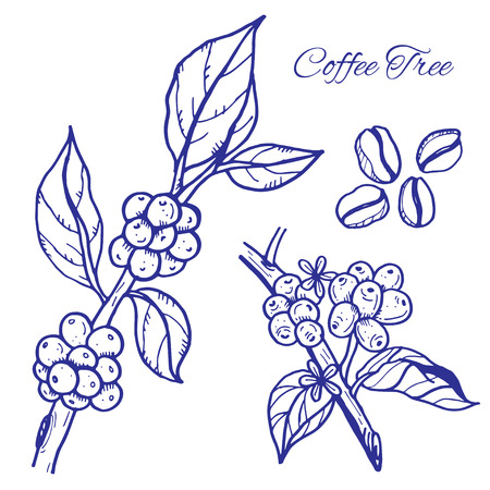coffee crop: Coffee beans on trees Illustration