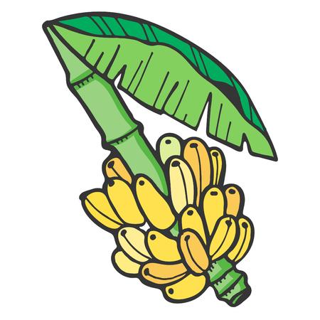 Bananas - Illustration Vector Illustration