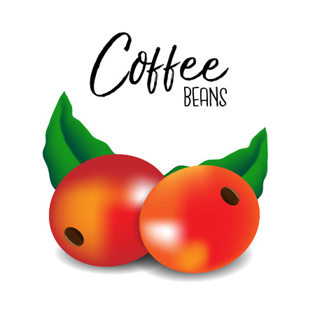 Coffee beans.Vector illustration Illustration