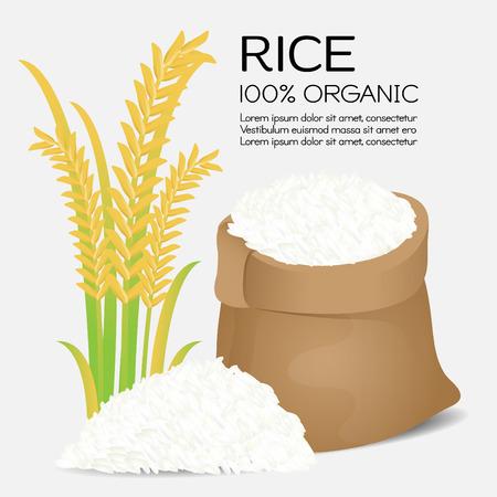 Rice grains. Vector illustration Illustration