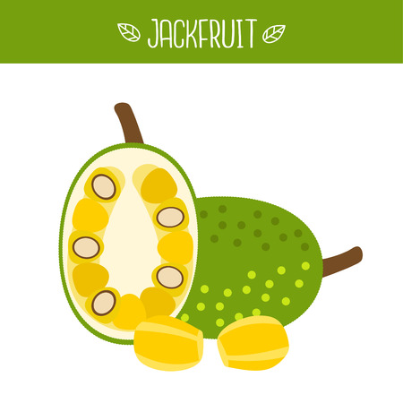 Jackfruit Vector illustration.