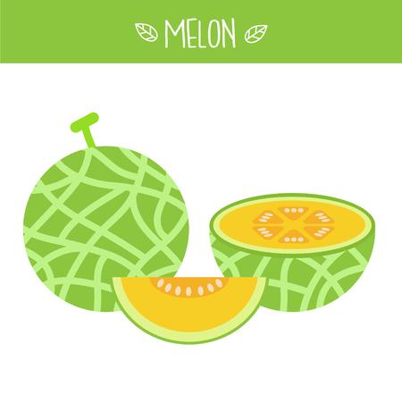 Melon Vector illustration.