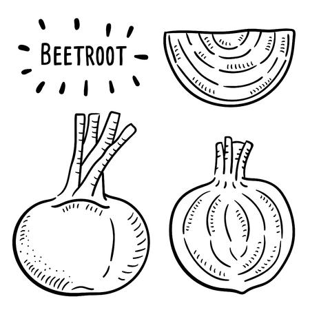 Hand drawn illustration of Beetroot. Vecteurs