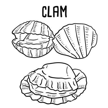 Hand drawn illustration of Clam.