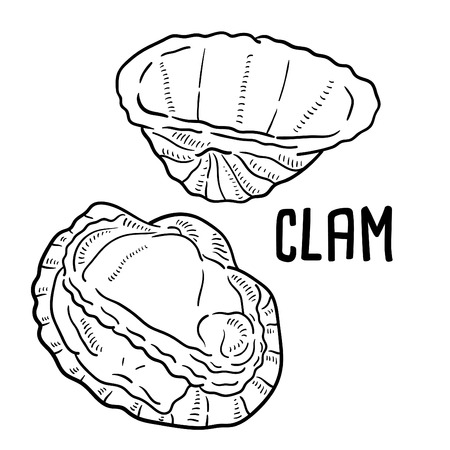 Hand drawn illustration of Clam.