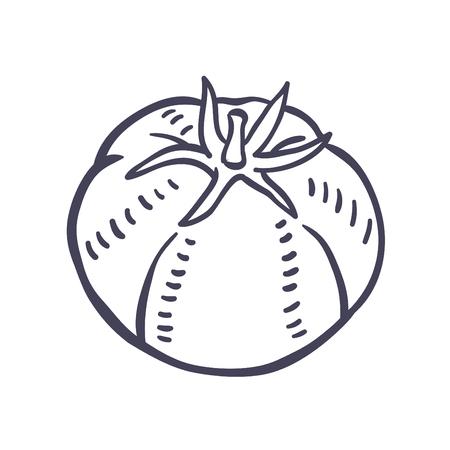 Hand drawn illustration of Tomato.