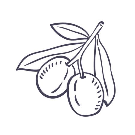 Hand drawn illustration of Olive.