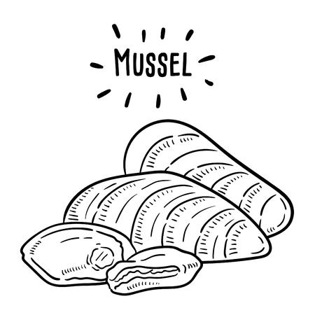 Hand drawn illustration of Mussel.