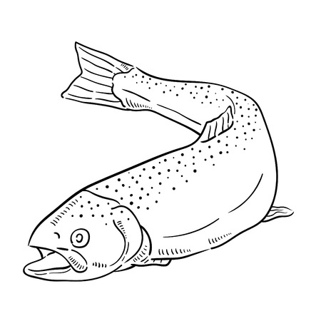 Hand drawn illustration of Salmon.