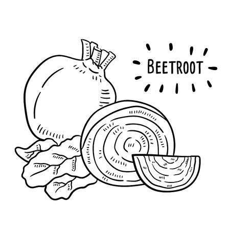 Illustration dessinée à la main de betterave. Vecteurs