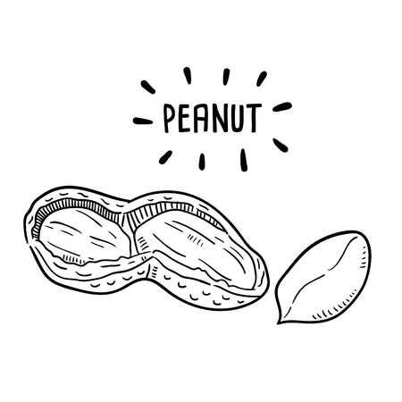 Hand drawn illustration of Peanut.