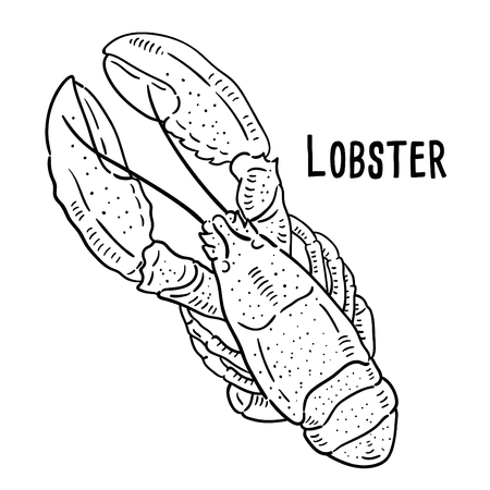 Hand drawn illustration of Lobster.