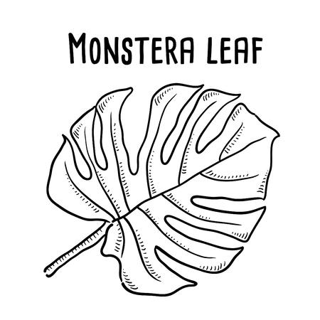Hand drawn illustration of Monstera Leaf.