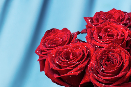 Red roses with drops of dew on a blue background