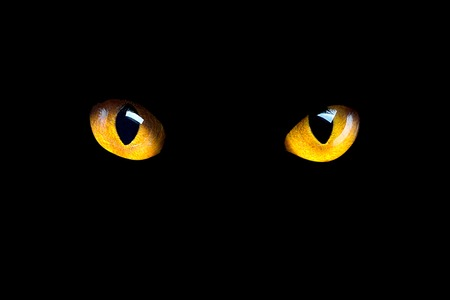 Orange cat eyes glow in the dark on a black background. Reklamní fotografie - 119950901