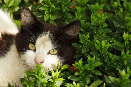 Cat hiding in the grass in summer Standard-Bild