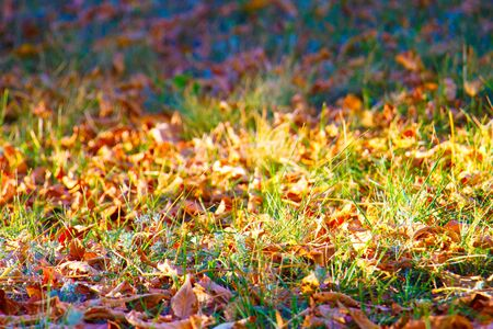 Autumn leaves on green grass in a city park, graphic resource. Stock Photo