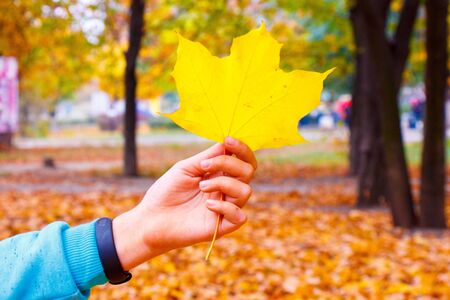 Wild childrens hands show golden fallen autumn leaves.