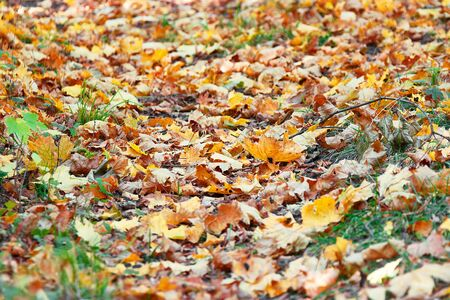 Autumn leaves on green grass in city park. Stock Photo - 130694074