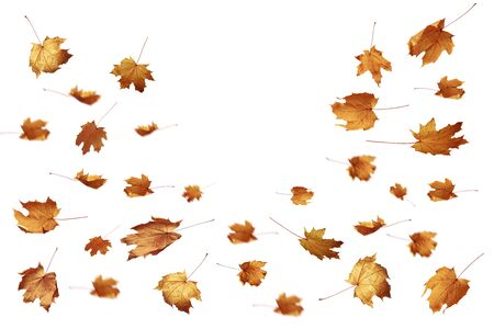 Autumn falling leaves on a white background as a graphic resource. Stock Photo