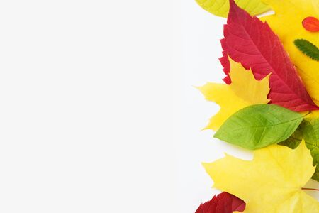 Border of colored falling maple leafs with copy space on white Stock Photo