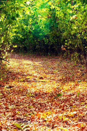 The road in the park strewn with autumn leaves