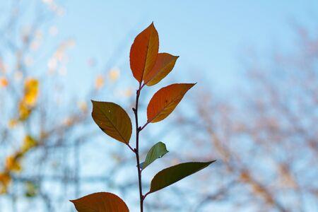 Autumn leaves on sky background Zdjęcie Seryjne