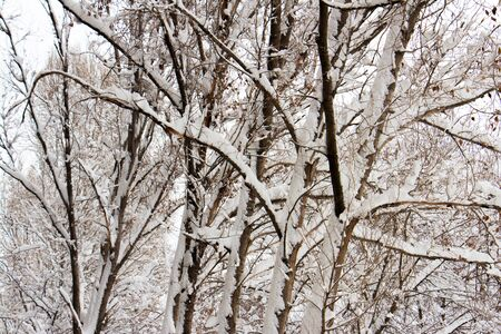 Branches of trees covered with hoarfrost and snow Фото со стока