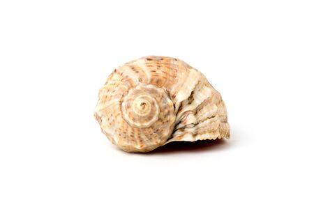 seashell on white background close-up
