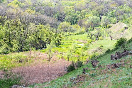 Landscape of deciduous forest or park top view. Фото со стока