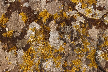 background, texture - multi-colored lichen covering the surface of the rock