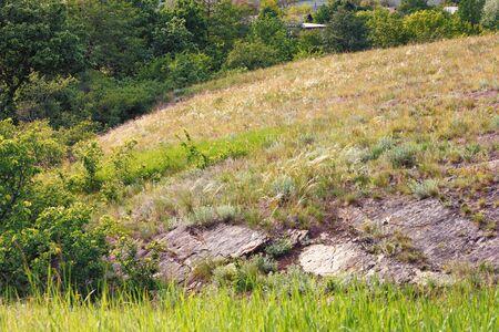 Summer green landscape Green grass slopes and trees. Фото со стока