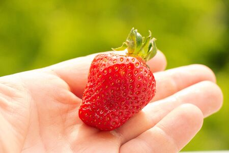 Hand holding a strawberry with a bite taken out against a green leafy background Zdjęcie Seryjne