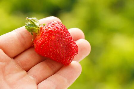 Hand holds a bright red ripe strawberry on a green background
