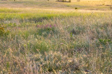 The grass of the Steppe grass on a bright summer day