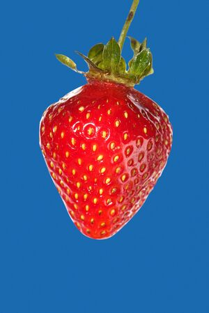 A freshly picked strawberry on a blue background.