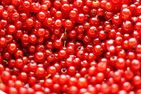 Natural background of red currant berries. 版權商用圖片