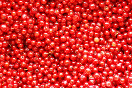 Natural background of red currant berries. Imagens - 150613745
