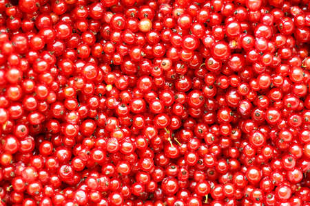 Natural background of red currant berries. Imagens - 151067897