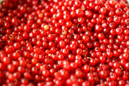 Natural background of red currant berries. Imagens - 151286087