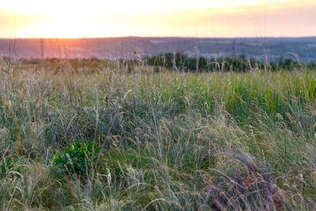 Bright beautiful sunny sunset over the meadow. 版權商用圖片