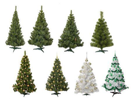 Christmas fur-trees on white photo