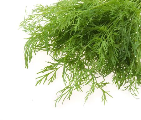 potherb: Bunch of ripe green dill isolated on white