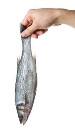 Raw fish isolated on white background photo