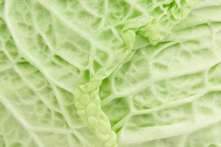 savoy cabbage: savoy cabbage texture