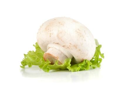 agaricus: white mushroom Stock Photo