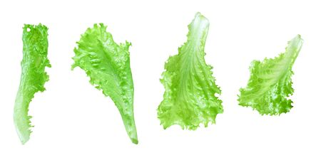 Lettuce leaves isolated on white background with clipping path. Batavia salad. Top view Stock Photo