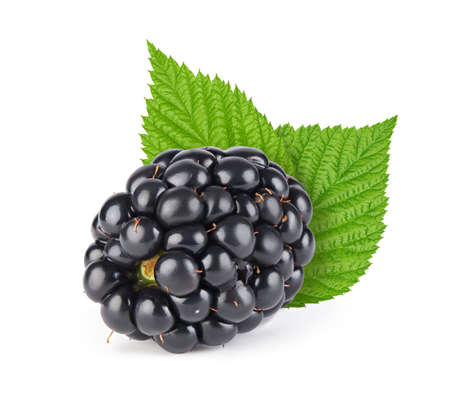 Ripe blackberry with leaves isolated on white background. Clipping path.