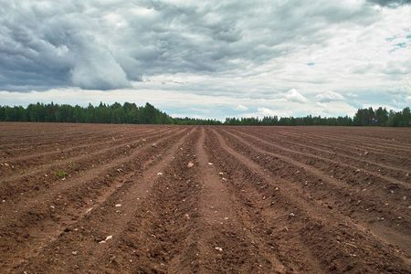 Ploughed field. Fresh tillage bordered with forest under cloudy sky Stock Photo